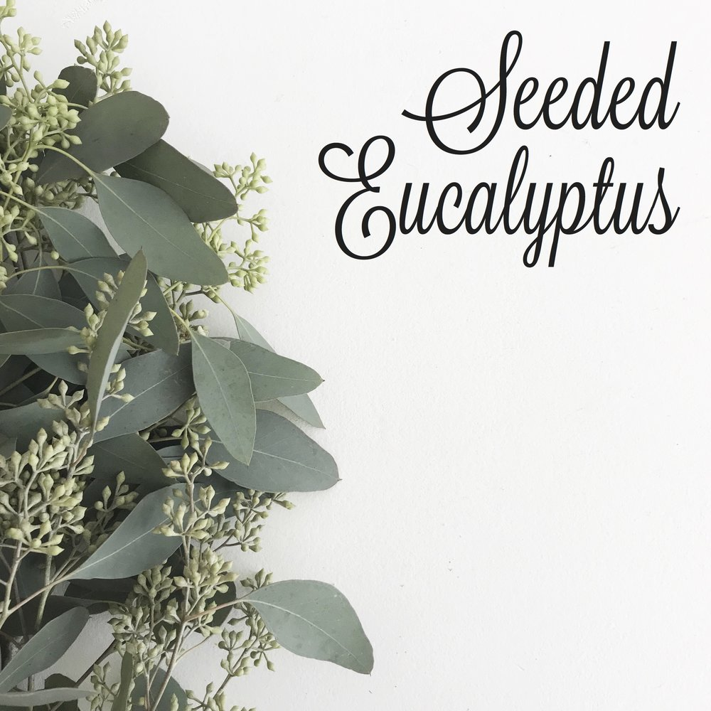 GREENS-Seeded Eucalyptus.jpg