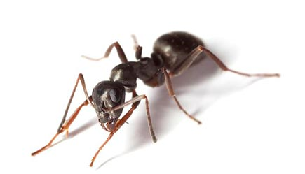 black ant on ground