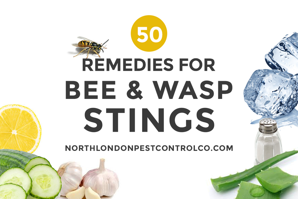 50 wasp sting remedies including cucumber, onion, lemon, salt and ice/