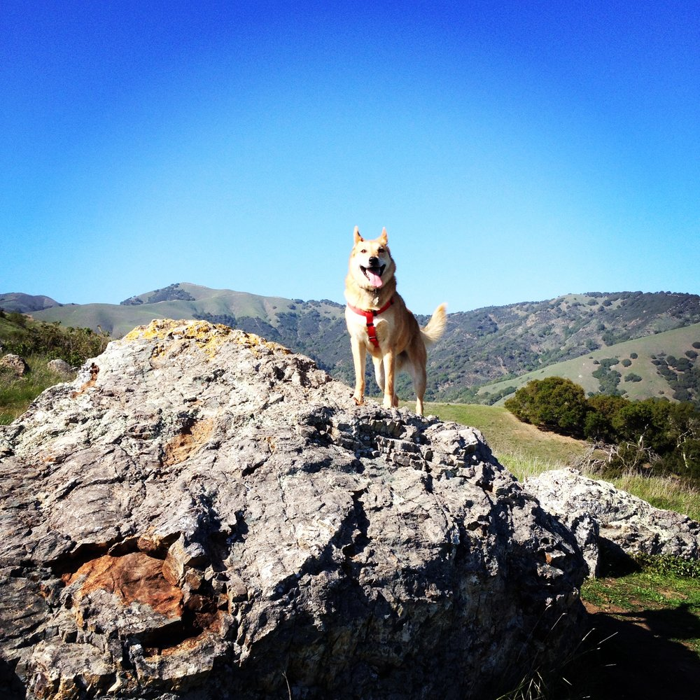 Wylie's favorite hiking spot.