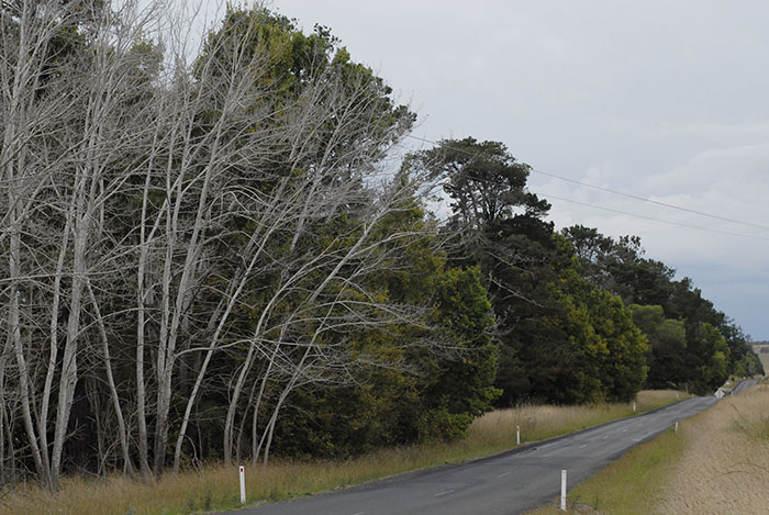 The Dangarsleigh road, where club handicap racing was held on Saturday afternoons. If you're not racing, taking your time to view the picturesque New England landscape from a touring bicycle makes a perfect cycling holiday.