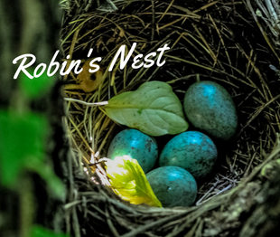 Robin's Nest  is Evergreen's food pantry and clothing closet that is open to anyone in our community who needs support. Gently used clothing can be donated to be available for students and their families, as needed. It is located at Evergreen across from Lost & Found.