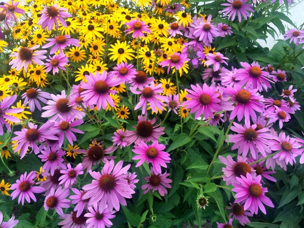 Mrs. K's Gardens