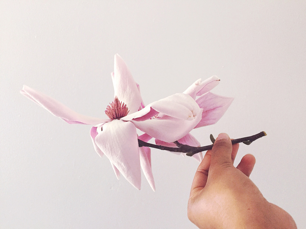 Stealing Magnolias