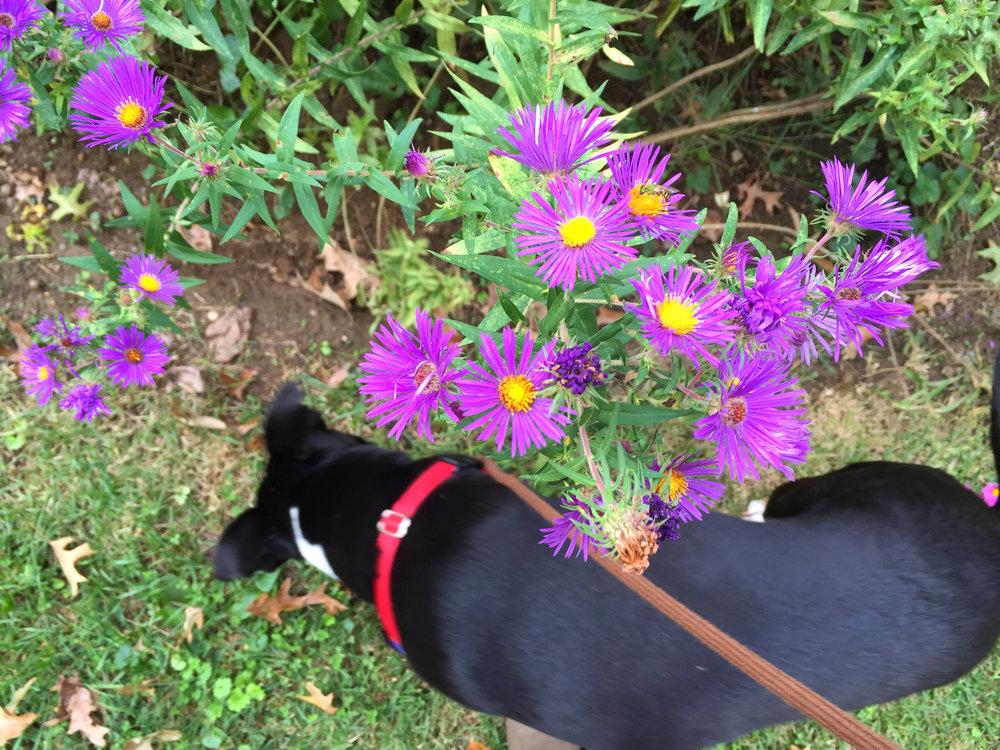 Teeny Blooms