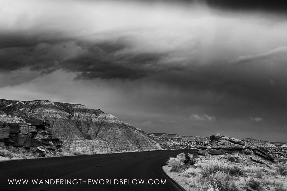 petrifiedforest_05_18_16-127.jpg