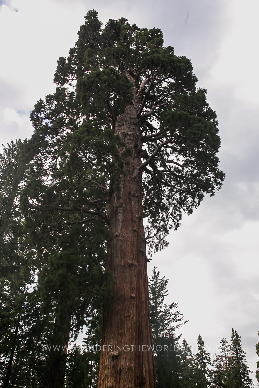 sequoianationalpark_06_11_16-158.jpg