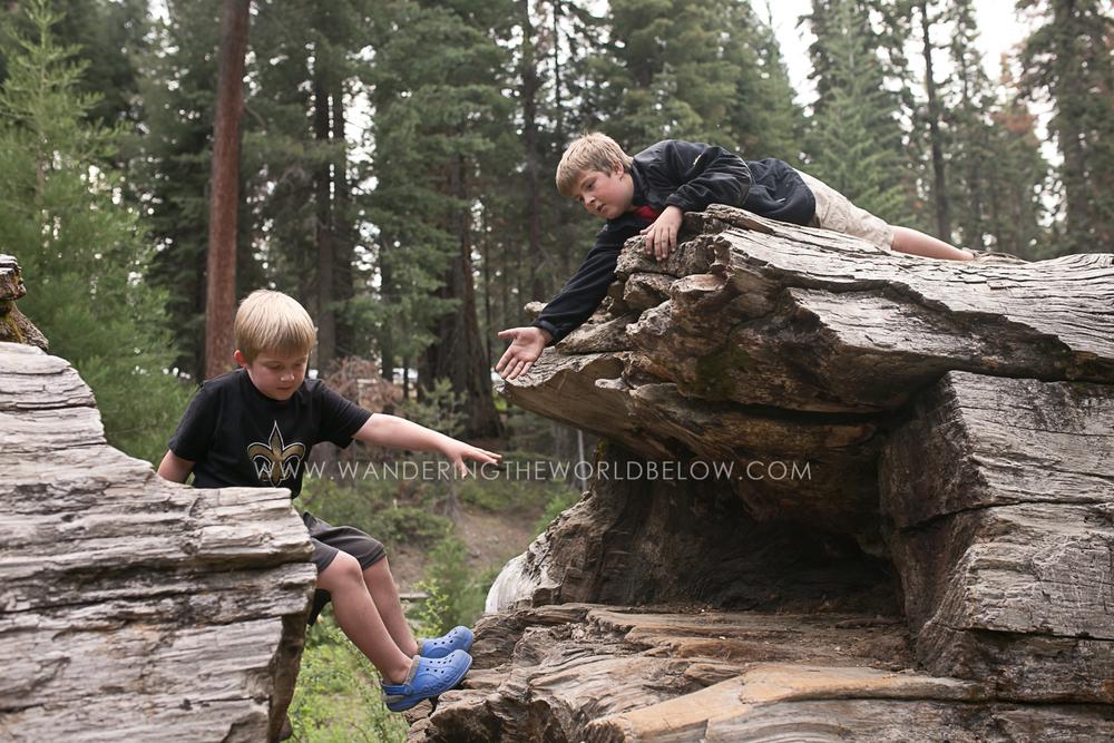 sequoianationalpark_06_11_16-180.jpg