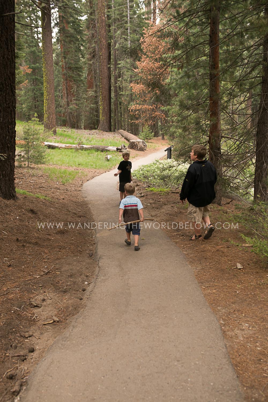 sequoianationalpark_06_11_16-191.jpg