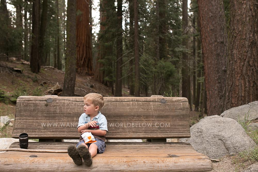 sequoianationalpark_06_11_16-203.jpg