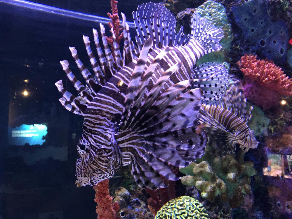 02 colorful fish.jpg