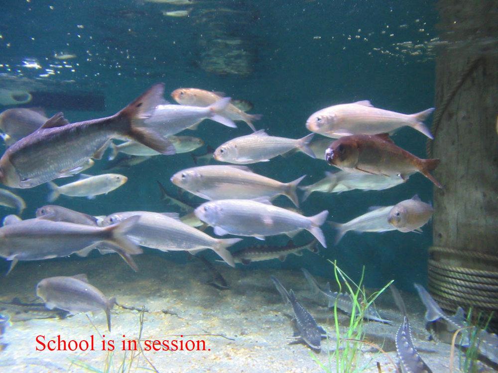 07 school is in session.JPG