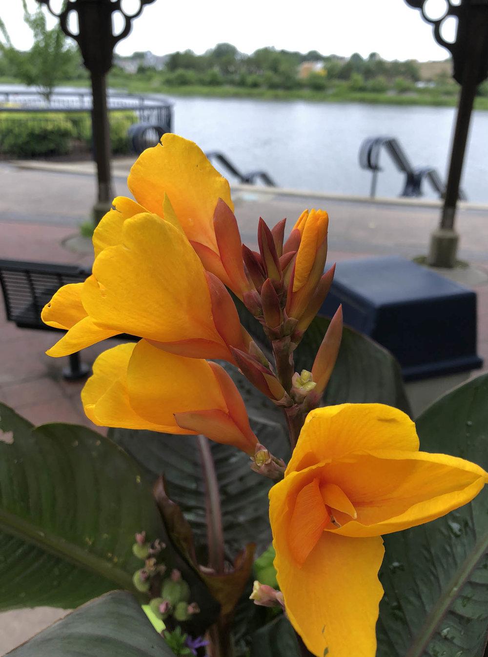 10 flora at the aquarium.JPG
