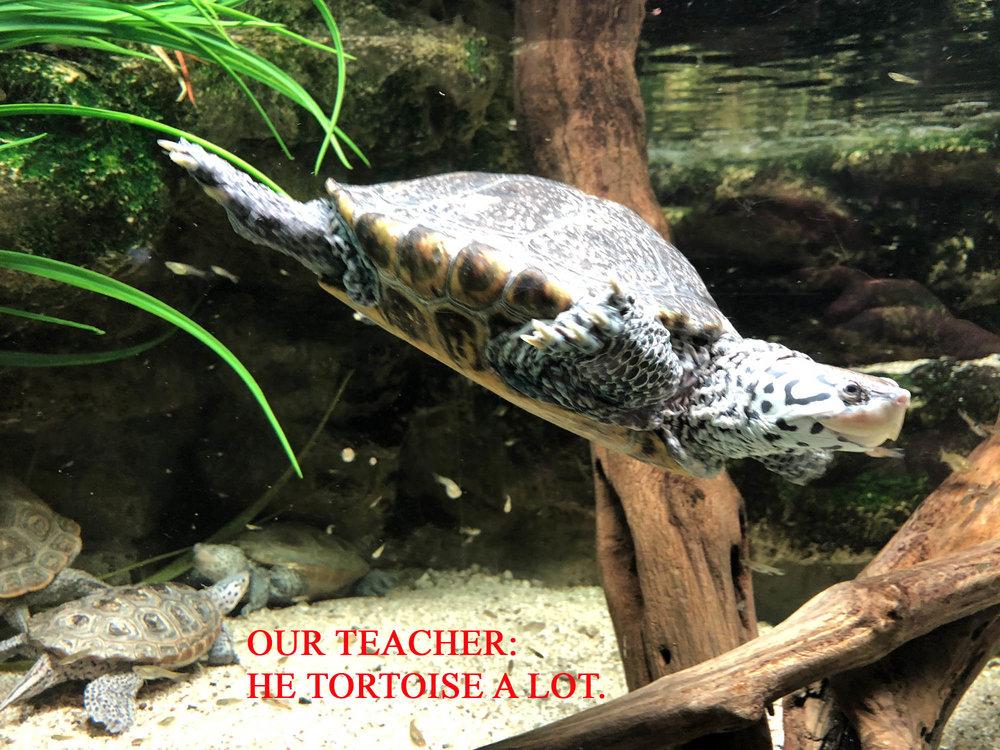 13 tortoise.JPG