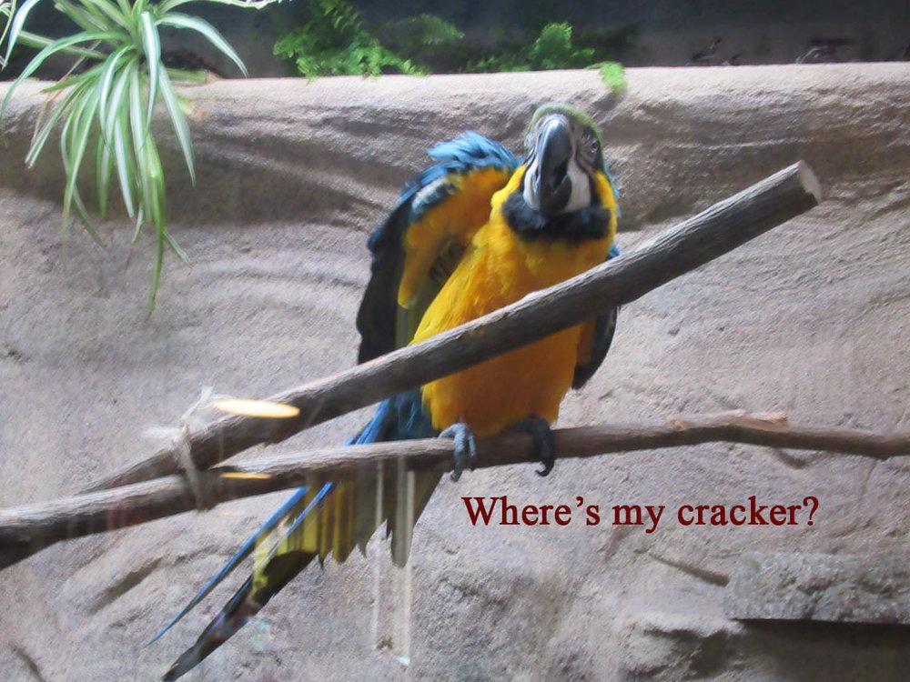14 Where's my cracker.JPG