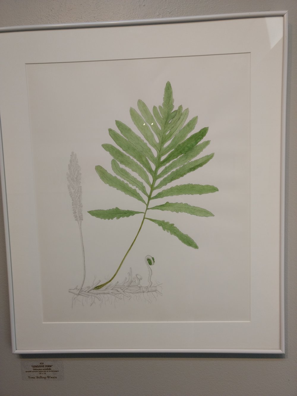 Sensitive Fern by Yon Shilling-Weisen