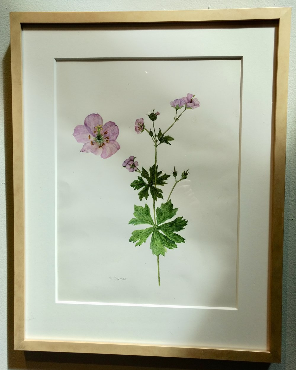 Geranium by Norma Karman