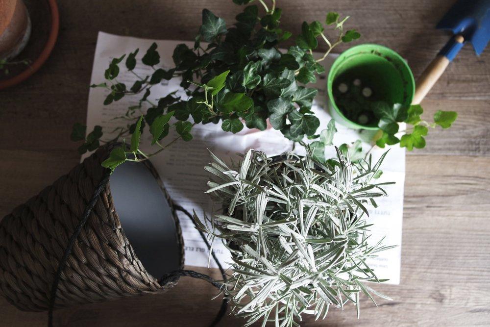 Rachelle Robinett food health diet meal prep sweetgreen plant based