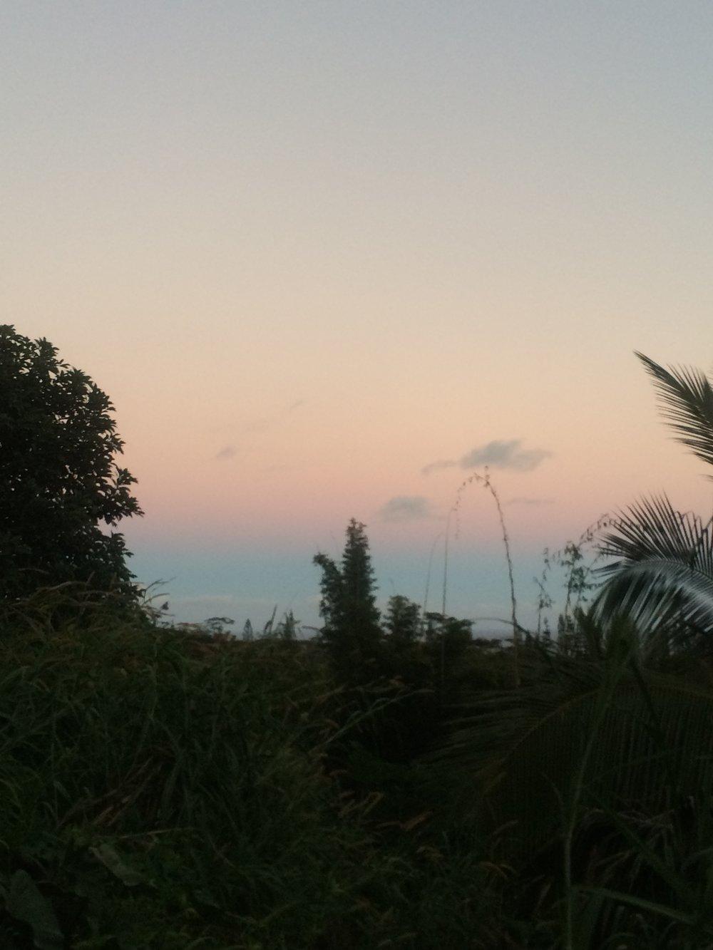 junglesunset.jpg