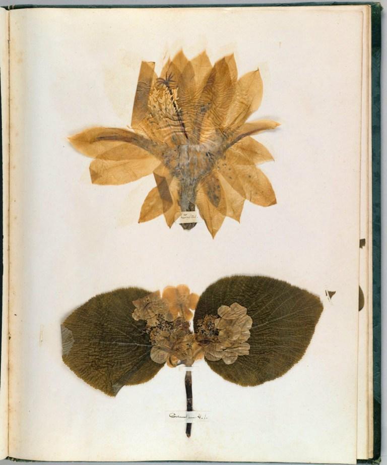Emily Dickinsons Herbarium Rachelle Robinett Supernatural Newsletter