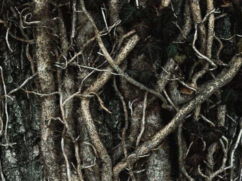 roots herbs herbalism rachelle robinett.jpg