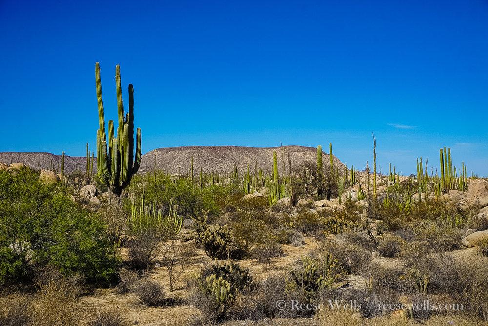 The saguaro & boulder fields of Cataviña