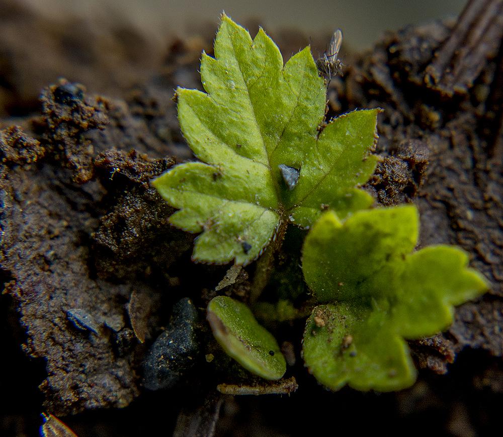 20160626_JPG_Macro_Soil_CA_KED20160626_0017.jpg