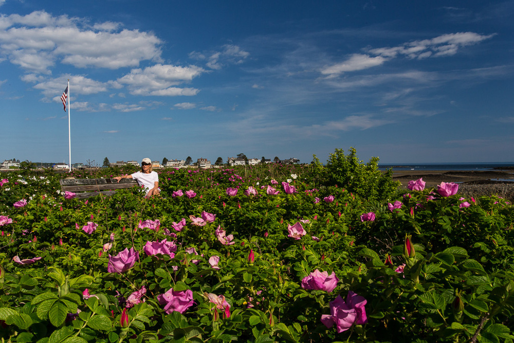 Sandra_in_the_Beach_Roses-2.jpg