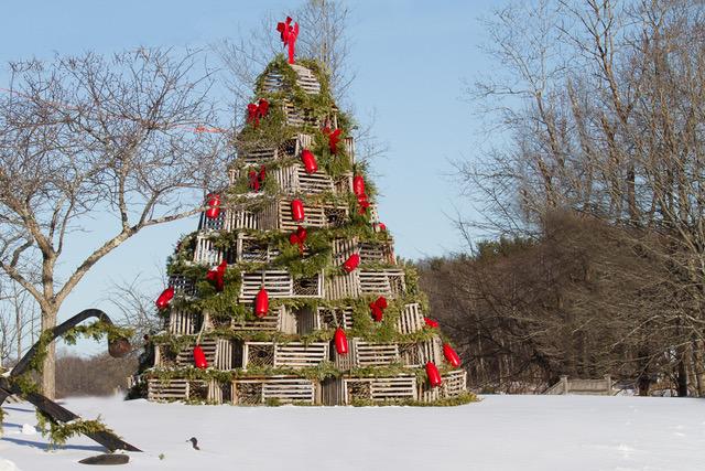 Cape_Porpoise_Christmas_Tree-.jpeg