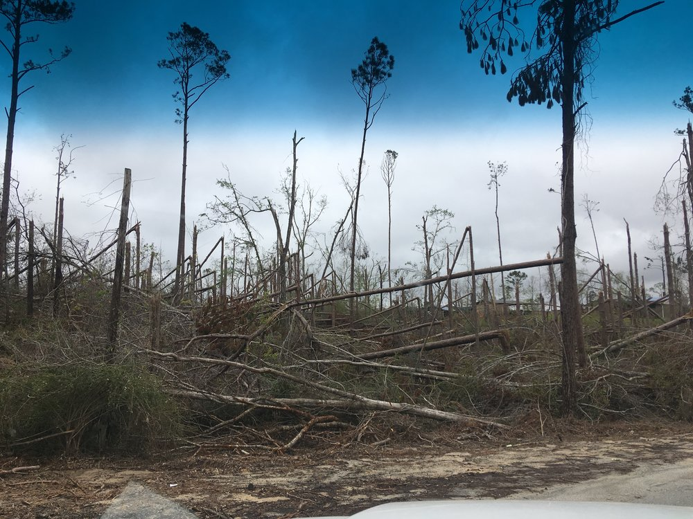 This once lush forest was leveled by Hurricane Michael.