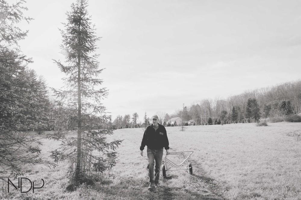 Tree Farm-19.jpg