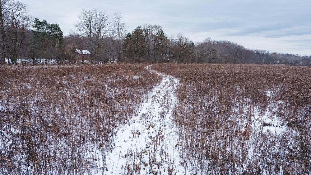 path-1.jpg
