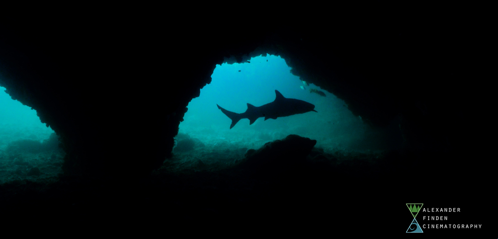 A whitetip reef shark swims beneath Gato Island, a dive site off the coast of Malapascua.