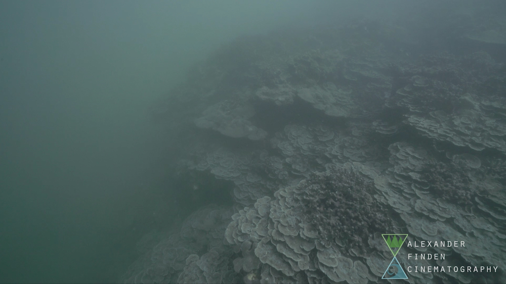 "The plate coral edge of Puhi Bay's reef flat in a ""marine snow"" of stirred bottom silt."