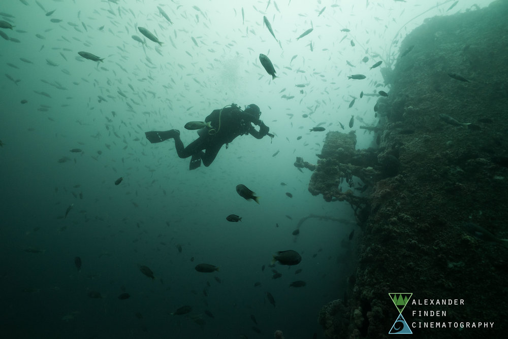Diver Francois Finet swims through a massive school of mixed species on the stern of the Yukon wreck.