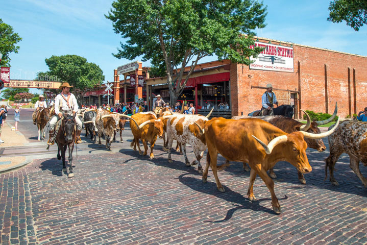 Elan-West7th-cattle-drive.jpg