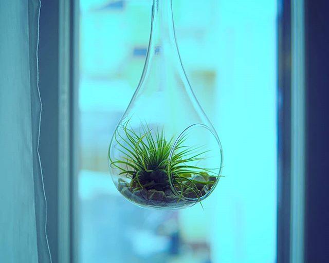 #sundaymood #ilmakasvi #airplants #photography #valokuvaaja #kevät #kevättalvi #aurinko