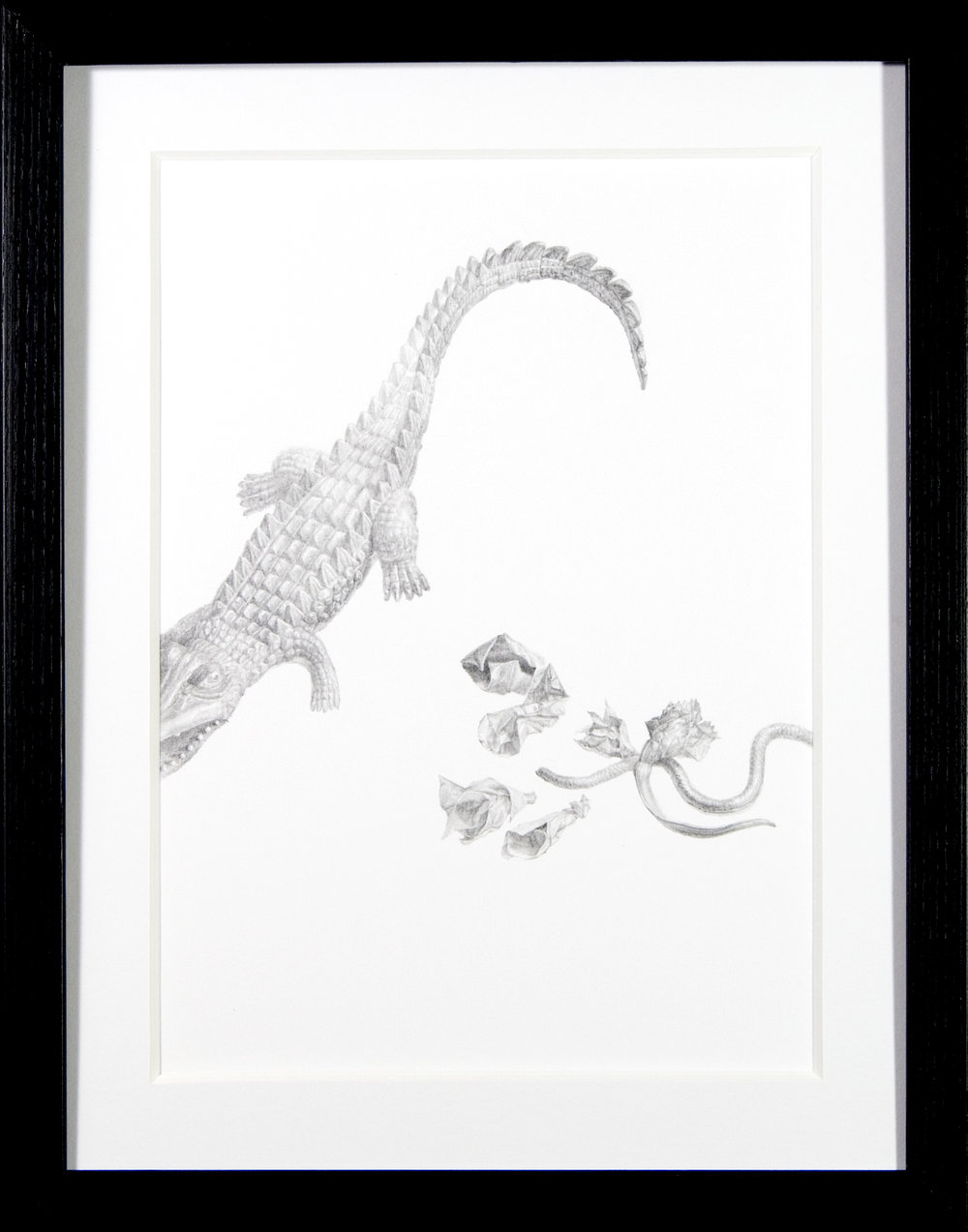 Crocodile Tears  -  $250  - Pencil on Paper, 11'' x 14'', FRAMED.
