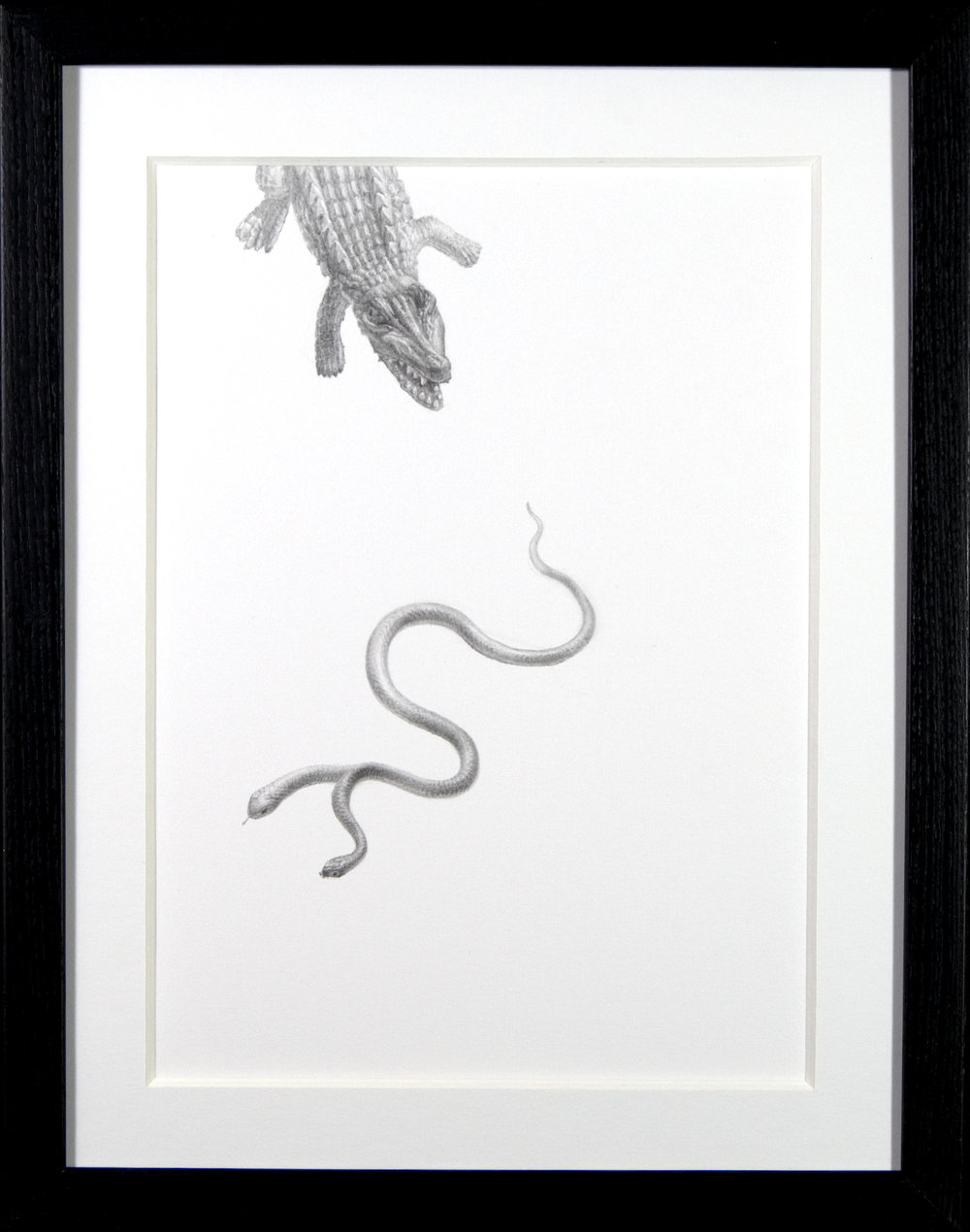The Bottom of the Food Chain - $250 - Pencil on Paper, 11'' x 14'', FRAMED.