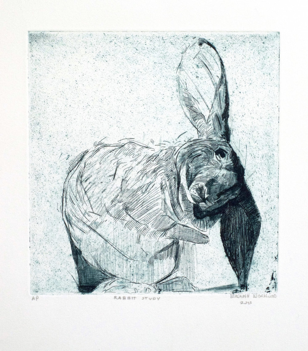 Rabbit Study - $200 - Etching on Paper, 14'' x 18'' UNFRAMED.  Edition of 15. Only 5 available.