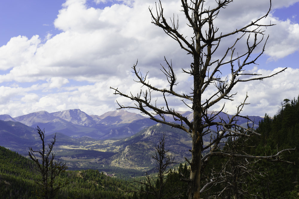 Lily Lake Trail, Valley Overlook - Rocky Mountain National Park, CO