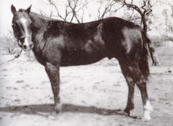 Silver King - sired by Old Sorrel, AQHA