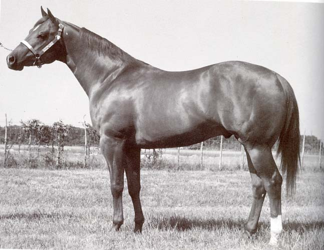 Skipa Star, AQHA World Champion - grandsire of Skippa Star Tami
