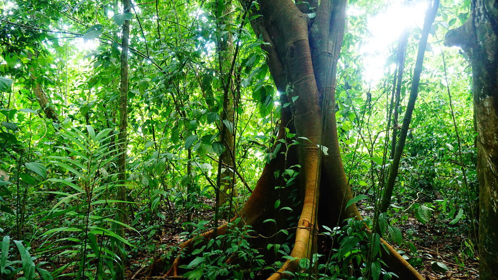 ayahuasca integration life coaching