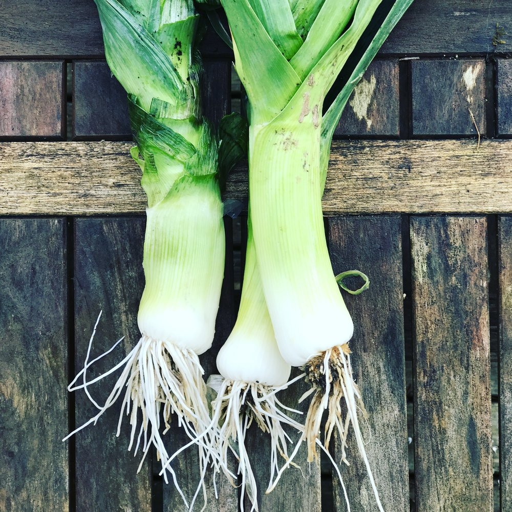 Leeks- Fresh out of the StHealthy Garden