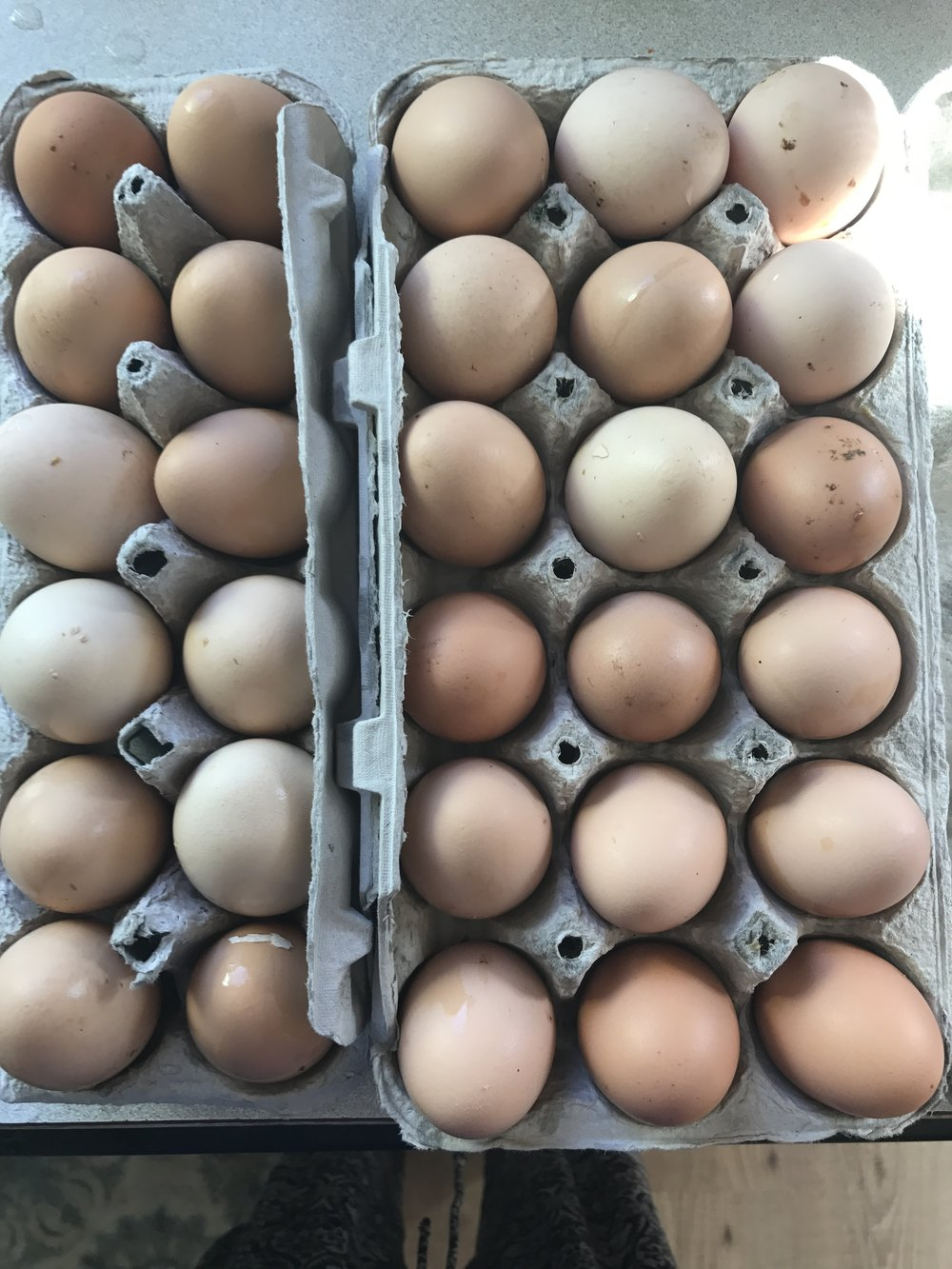 Eggs from the Sthealthy chickens