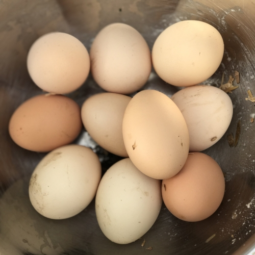 Fresh eggs from Sthealthy chickens
