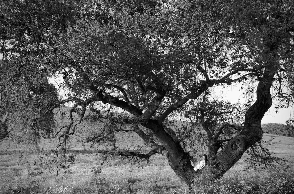 TreePicWeb.jpg