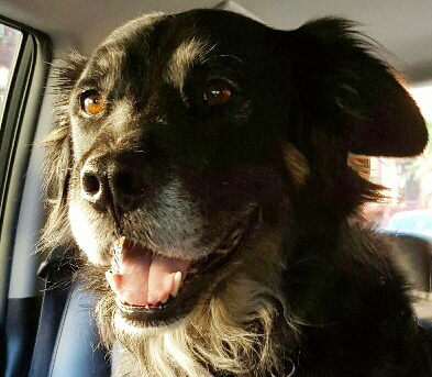 Max, my happy California dog-turned-city dog during his Canine Car ride!
