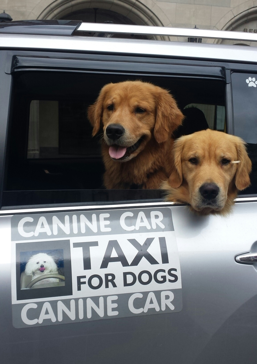 Cronin, Chester & Atticus in Canine Car 7.6.15.jpg